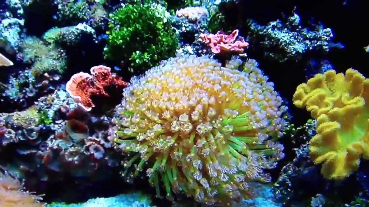Client Aquarium Showcase Reef Right Marine Aquarium Services